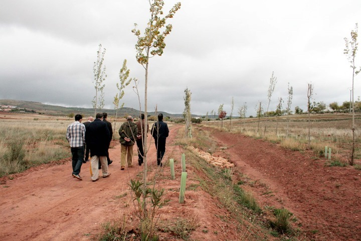 TERRINCHES_Reforestación paraje San Isidro