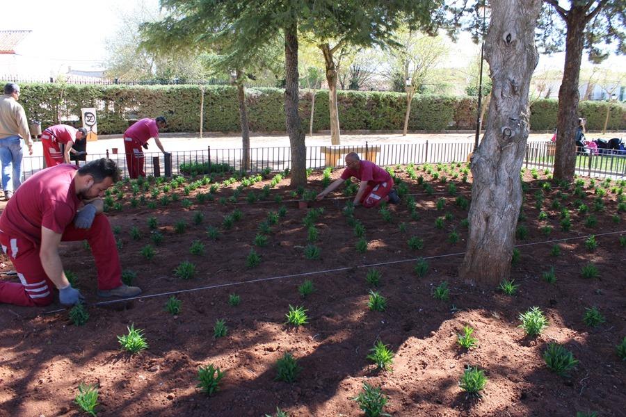Plantación  Jardines ADIN (1)