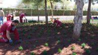 El servicio de parques y jardines de Villanueva de los Infantes realiza tareas de ornamentación y reposición en las zonas verdes