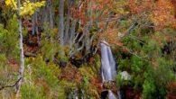La UNESCO incluye en su Lista de Patrimonio Mundial el Hayedo de la Tejera Negra de Guadalajara