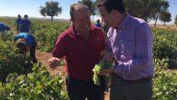 El Gobierno de Castilla-La Mancha publica 31,4 millones de euros de ayudas para la reestructuración de hasta 15.000 hectáreas de viñedo